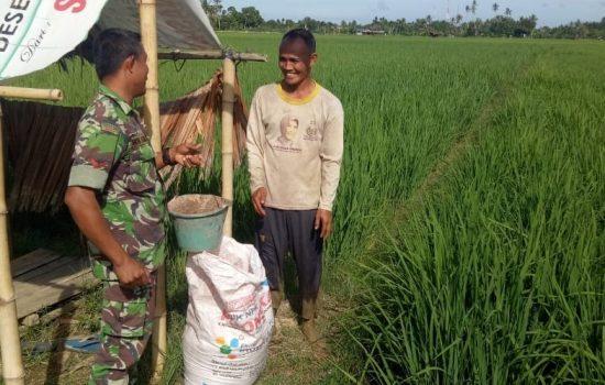 Dengan Ramah Babinsa Koramil 04/Susoh Ulurkan Tangan Bantu Petani