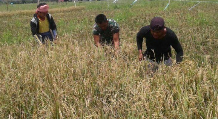 Pendampingan Pertanian untuk Sukseskan Hanpangan