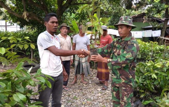 Babinsa Kuala Batee Serahkan Bantuan 4500 Bibit Pala