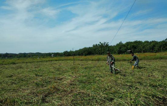 Serda Sigit Bantu Petani Bersihkan Lahan Sawah