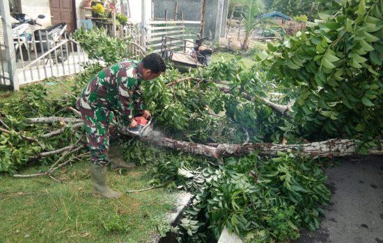 Babinsa Calang Bersihkan Pohon Tumbang di Badan Jalan