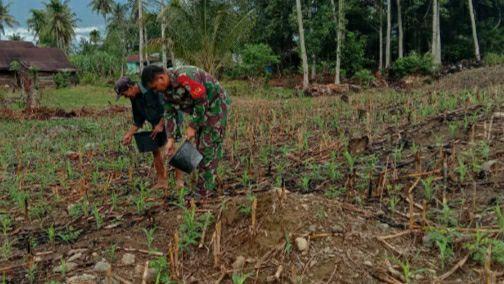 Babinsa Agara Dampingi Petani Memupuk Tanaman Jagung