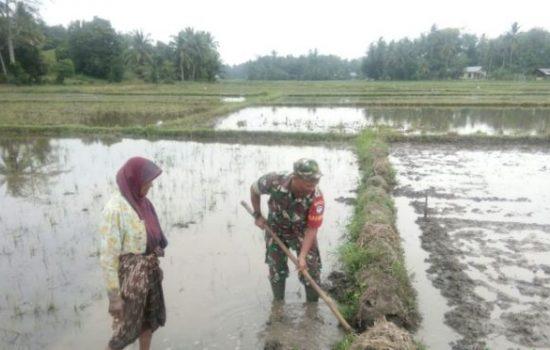 Babinsa Ramil 05/Idr Bantu Petani Siapkan Lahan Pembibitan Padi