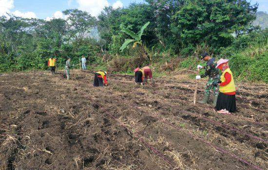TNI dan Dinas Pertanian Tanam Jagung Paragon di Demplot Kodim Ateng
