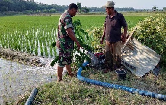 Sertu Darmi Bantu Petani Mengairi Sawah Gunakan Mesin Pompa Air