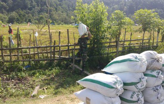 Sertu Saifullah Bantu Petani Angkat Padi