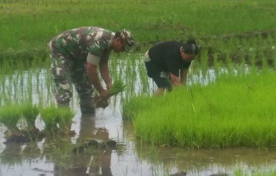 Kopda Rahmad Bantu Petani Siapkan Bibit Padi