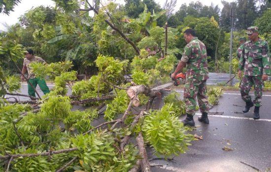 TNI Kembali Evakuasi Pohon Tumbang di Jalan