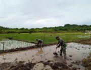 Babinsa Darul Hikmah Bantu Petani Siapkan Lahan