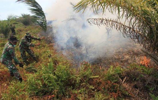 4 Hektare Lahan Sawit HGU Milik PT Kalista Alam Terbakar, Kodim Nagan Raya Lakukan Ini