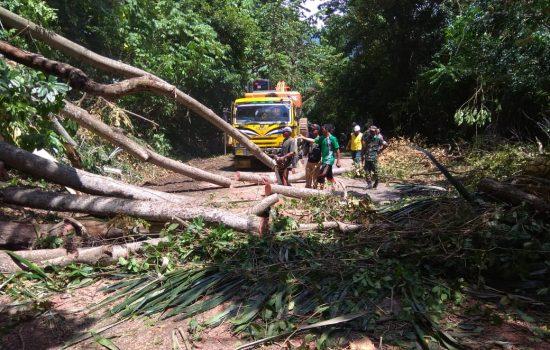 Koramil Lamno Bantu Evakuasi Pohon Tumbang di Gunung Geurute