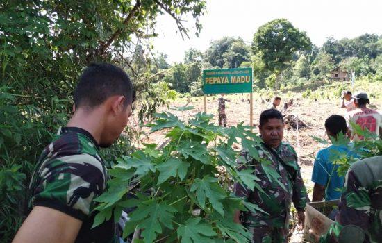 TNI Bantu Angkat Perekonomian Warga, Sediakan Lahan Pepaya Madu dan Jeruk Siam