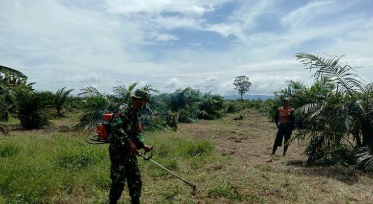 Dukung Katahanan Pangan di Wilayah, Kopda Syaipul Bantu Petani Babat Rumput