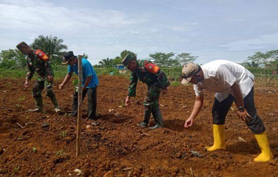 Danramil Singkohor Tinjau Lahan Kelompok Tani Sejahtera Jaya