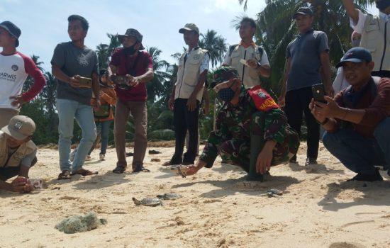 Hindarkan Dari Kepunahan Penyu, Personel Koramil 01/Pulau Banyak Bantu Lepaskan Tukik ke Laut