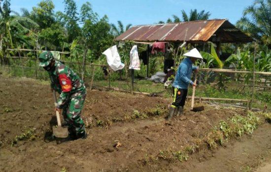 Babinsa Bantu Warga Binaanya Dalam Pemanfaatan Lahan Kosong Guna Wujudkan Ketahanan Pangan