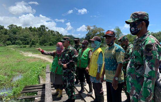 Dandim 0115/Simeulue, beserta pasi Ter Kodim, turun langsung mengecek perkembangan padi program 1000 Hektar di kecamatan Salang