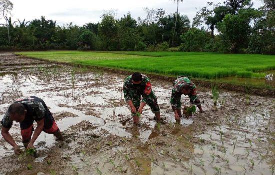 Semangat Babinsa Koramil 07/JP, Wujudkan Swasembada Pangan Di Wilayah Binaannya