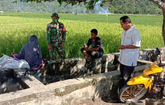 Maksimalkan Pendampingan Pertanian, Babinsa Koramil 08/Bakongan Komsos Dengan Petani