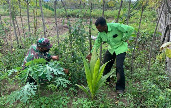 Paran Babinsa Koramil 03/Lhoknga Dalam Pertanian