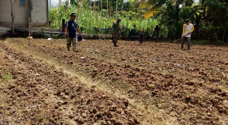 Dampingi Petani Cabai, Babinsa Cek Lahan Dan Bibit Yang Siap Tanam