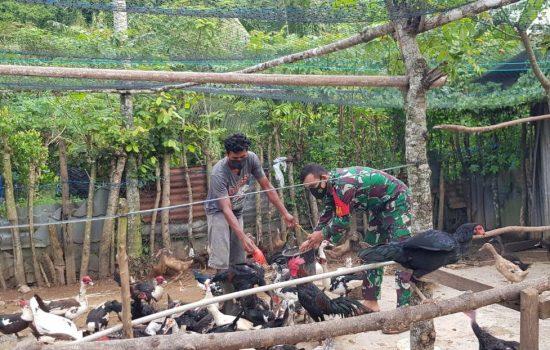 Babinsa Lakukan Penyuluhan Peternakan Ayam Pada Mảsyarakat Dengan Tetap Patuhi Protokol Kesehatan