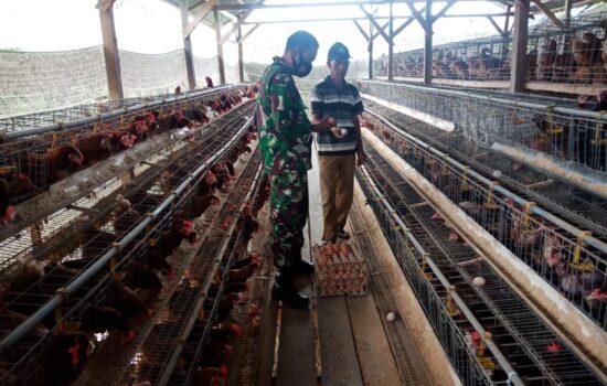 Babinsa Posramil 09/Lembah Sabil sambangi warga binaan peternak ayam petelur