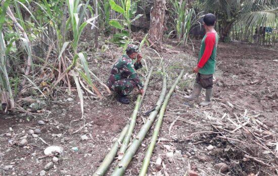 Bantu Petani Siapkan Bambu Untuk Pagar Kebun Babinsa Lamno Himbau Agar Tidak Membuat Pagar Kawat Kontak