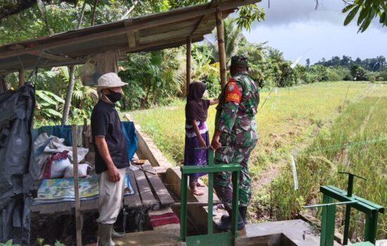 Babinsa Koramil 01/Simeulu timur laksanakan pengecekan perkembangan padi milk petani di Desa Ganting