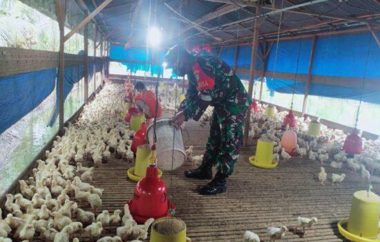 Babinsa Melalui Komsos Berikan Semangat Pada Peternak Ayam