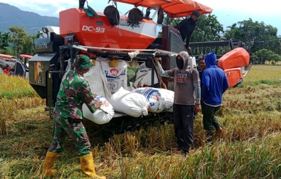 Peduli Kesejahteraan Petani di Masa Pandemi, Babinsa Ini Terjun Ke Sawah Berikan Motivasi