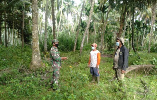Turun ke Lapangan Babinsa Teunom Ingatkan Petani Kebun Tentang Bahaya Karhutla